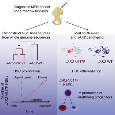 Reconstructing the Lineage Histories and Differentiation Trajectories of Individual Cancer Cells in Myeloproliferative Neoplasms